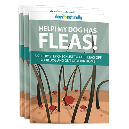 How To Get Rid Of Fleas Naturally: On Your Dog, At Home & In