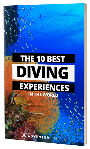 Liveaboard Diving: The Ultimate Guide on Planning a